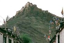 티벳(티베트) 갼체 종